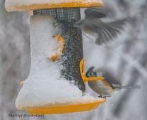 300-landing-all-birds_020221_0043