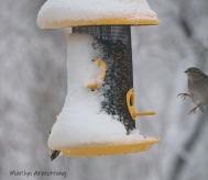300-landing-all-birds_020221_0063