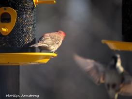 300-pair-of-birds_022121_0092