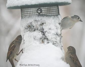 300-snow-all-birds_020221_0038