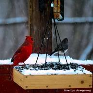 300-square-cardinals-snow_012621_0048