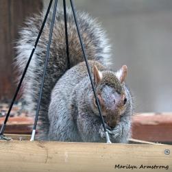 300-square-injured-squirrel_021821_0006