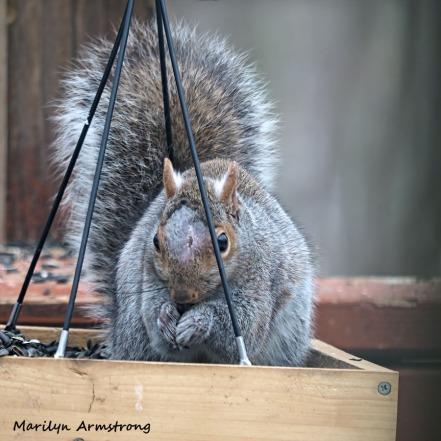 300-square-injured-squirrel_021821_0007