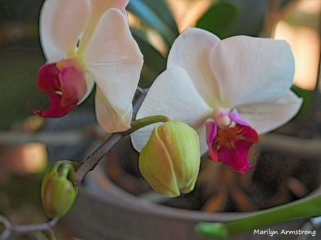 300-macro-orchid_032221_006