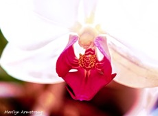 300-macro-orchid_032221_009