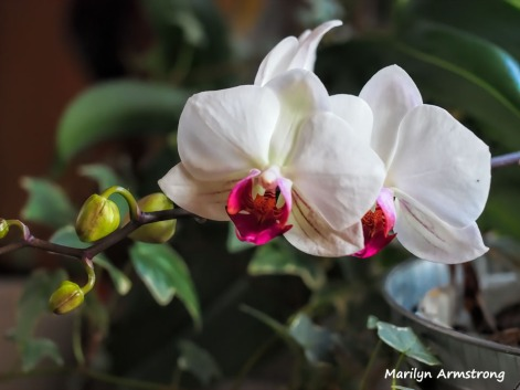 300-macro-three-orchids-2__032521_003