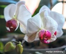 300-macro-three-orchids-2__032521_005