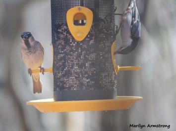 300-nuthatch__sparrow__common-birds__032321_005