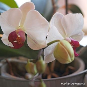 300-square-macro-orchid_032221_012