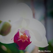300-square-new-orchirds_031621_002