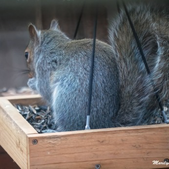 300-tails-you-win-squirrel_030321_001