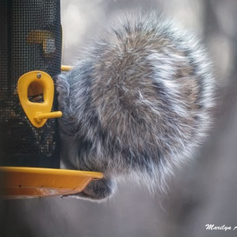 300-tails-you-win-squirrel_030321_014