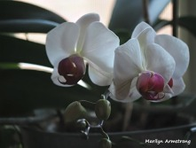 300-three-orchids-2__032521_017