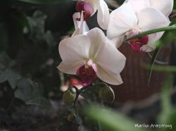 300-five-orchids__040621_012