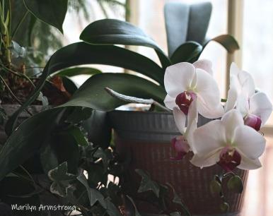 300-five-orchids__040621_016