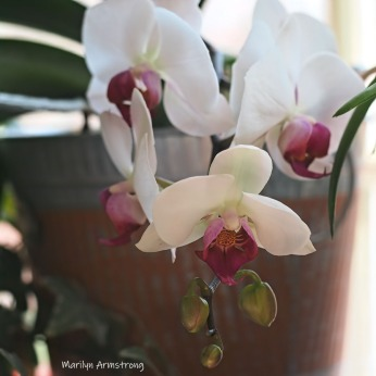 300-square-five-blooiming-orchids__040421_038