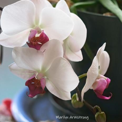 300-square-five-orchids__040621_013