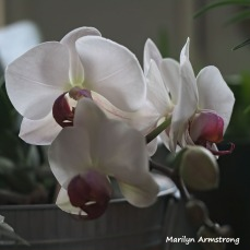 300-square-four-orchids__033121_001