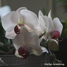 300-square-four-orchids__033121_001